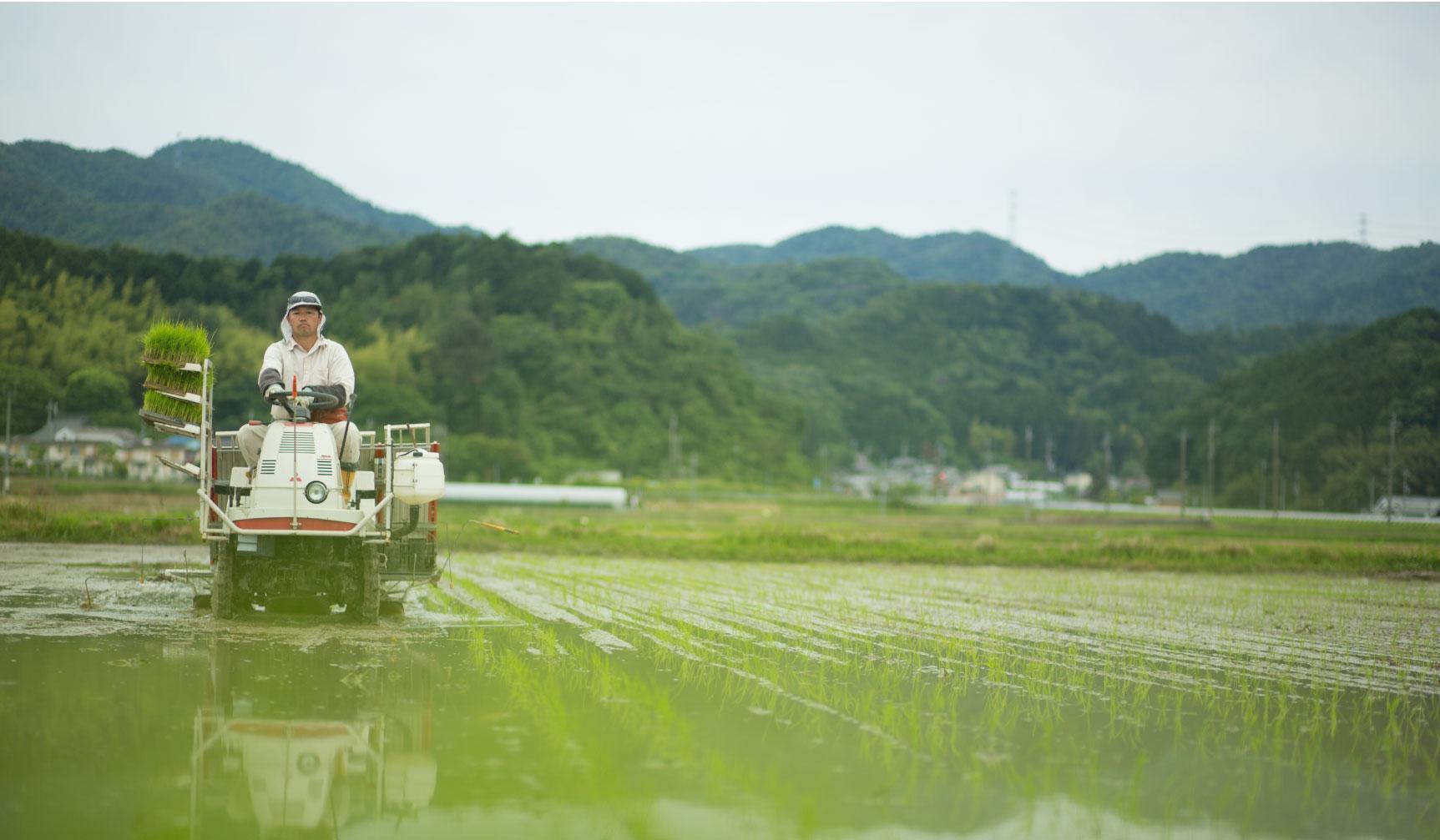 White-Rice-field_lr
